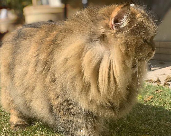 Naimal Khawar Khan's cat