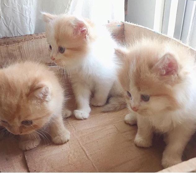 Poshay's babies