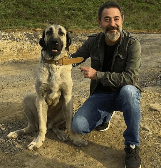 Ayberk Pekcan aka Artuk Bey in Dirilis Ertugrul 6 Artuk Bey Ertugrul Cast Ayberk Pekcan 4